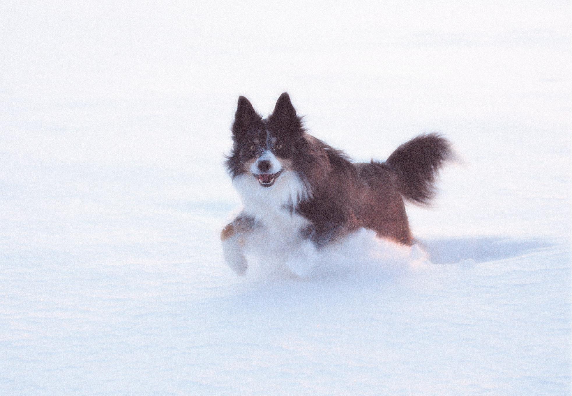 SnowMick