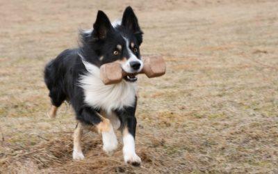 Hundsporten – en dyr sport?